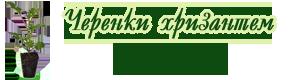 """Интернет-магазин """"Черенки хризантем"""""""