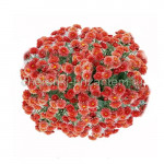 Хризантема Мультифлора №63 Branglory Red (Бранглори Ред)