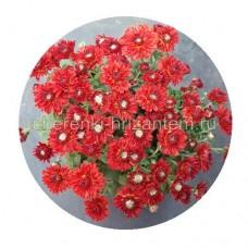Хризантема Мультифлора №27 Branspice Red (Бранспайс Ред)