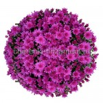 Хризантема Мультифлора №17 Branbeache Lilac (Бранбич Лилак)