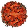 Хризантема Мультифлора №1 Branbeache Orange (Бранбич Оранж)