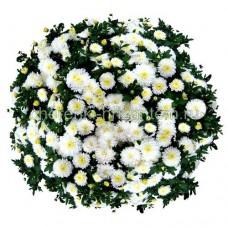 Хризантема Мультифлора №5 Merelin (Мэрелин)